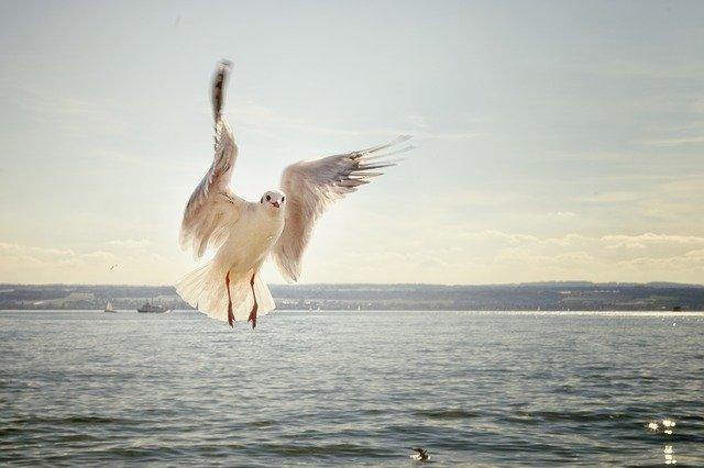 「躍進へ」のイメージ画像