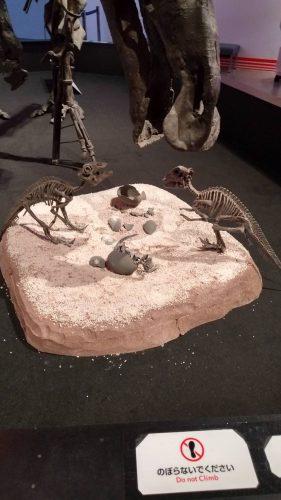 恐竜博2019 画像2
