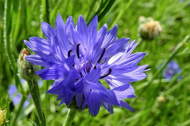 「神秘的なカシミールサファイアのブルーの色」のイメージ画像