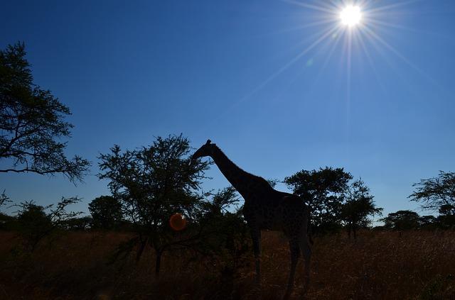 「ジンバブエ産」のイメージ画像