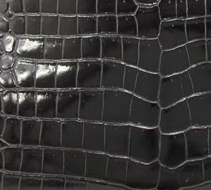 「クロコダイル ポロサス」のイメージ画像