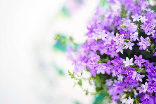 「価値が高いバイオレットサファイアの色」のイメージ画像