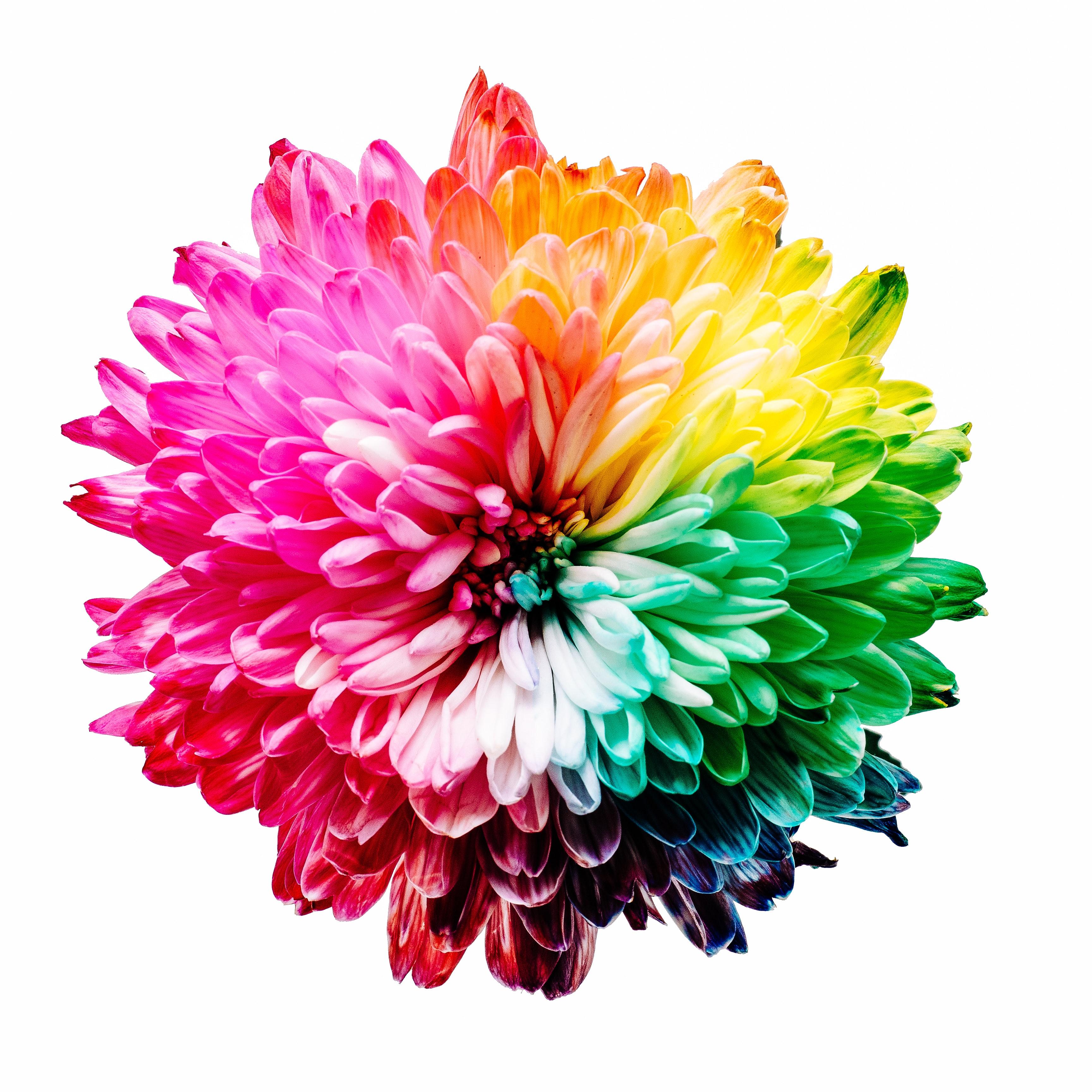 「価値を決めるポイント1:カラー(色味)」のイメージ画像