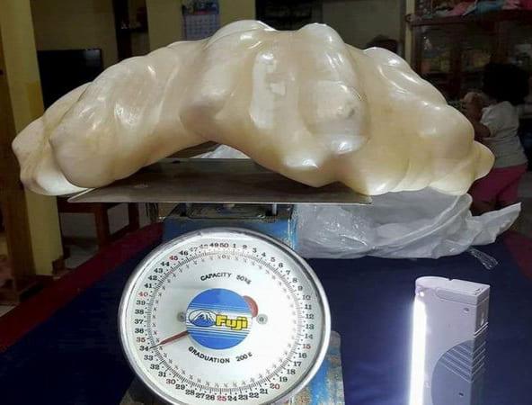 「オオシャコ貝」のイメージ画像