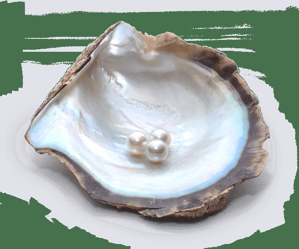 「ホタテ真珠にあさり真珠!?パールを作る個性豊かな貝たち」のサムネイル画像